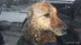 В Выборге спасатели вызволили собаку из ледяного плена б...
