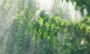 Лето придёт в Ленобласть под грозы и ливни