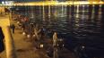 Ночью в центре Петербурга заметили охотников за корюшкой