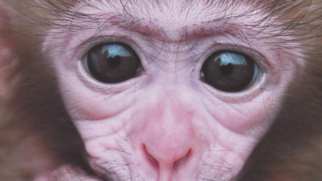 Ленинградский зоопарк получил в подарок милых эстонских обезьян и потешного броненосца