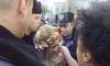 Депутаты Верховной Рады полюбовались на голых Femen, а потом сдали их полиции