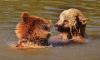 МЧС Ленобласти предупреждает о встрече с дикими животными