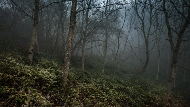 В Вепсском лесу Ленобласти нашли труп девушки