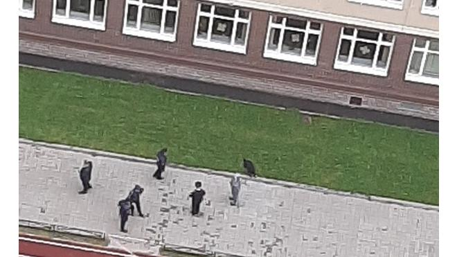 Во дворе школы в Мурино нашли муляж гранаты