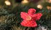 Дворцовая площадь может остаться без новогодней ели