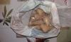 Петербургский Франк нашел в квартире драгдилера 5 килограмм амфетамина