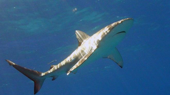 На Гавайях акула растерзала американскую пенсионерку