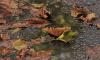 Во вторник в Ленобласти ожидается +6 и небольшой дождь