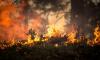 Площадь действующих лесных пожаров в России превысила 60 000 гектаров