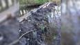 В соцсетях спорят, кто засыпал исток речки в Приозерском ...