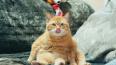 В Ленобласти пожарные спасли кота, застрявшего в окне
