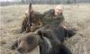 Прокуратура интересуется: законно ли Валуев убил медведя?