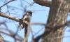 Петербуржцам предлагают посчитать птиц