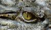 Ветеринары решили не выселять крокодила из подвала жилого дома в Петергофе