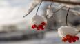 В среду в Петербурге пройдет мокрый снег с дождем