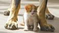 Жителей Петербурга просят временно приютить кошек ...