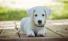 Догхантеры объявили охоту на собак в Купчино