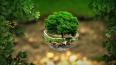 В Петербурге пройдет крупнейший фестиваль экологических ...