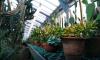 СПбГУ запустил видеотур по своему Ботаническому саду