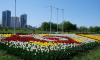 В Купчино распустились более 25 тысяч тюльпанов