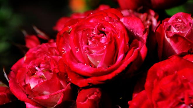 Накануне 8 марта в Петербург привезли 16 млн цветов
