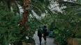 Теплицы Таврического сада ждут инвесторов до февраля