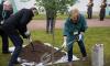 У Ратной палаты посадили черешчатый дуб, который будет расти 400 лет