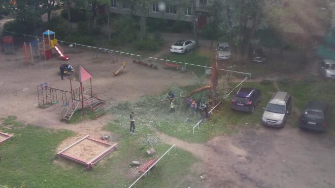 В Ленобласти дети убирали поваленные деревья вместо коммунальщиков
