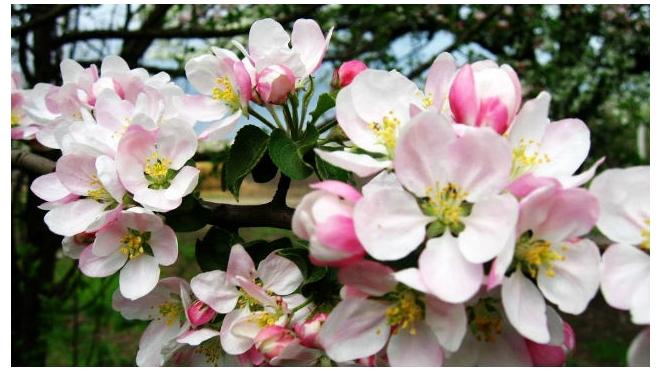 На площади Революции в Москве предложили разбить яблоневый сад