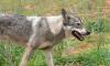 В Выборгском районе стартовала ежегодная кампания против бешенства животных