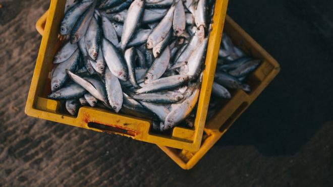 В Петербурге специалист Россельхознадзора незаконно забирала морепродукты под видом проверки