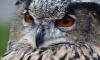 Петербуржцы в соцсетях просят спасти сову, которая живет на улице Турку