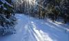 Убийство на лыжне: В Татарстане на лыжной базе убили молодую женщину