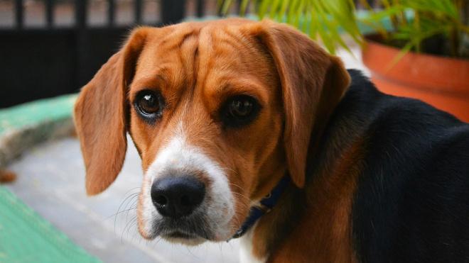 Собака помогла раскрыть убийство в Полежаевском парке Петербурга