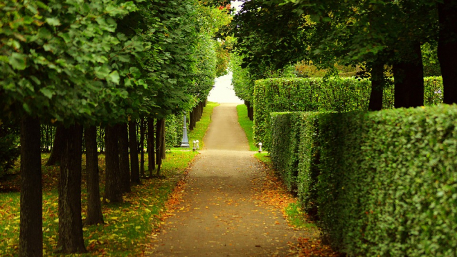 Петербуржцы определили самые популярные сады города