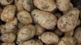 Голодный житель Ивановской области украл 100 кг овощей ...