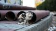 Петербургские чиновники определили судьбу кошек в ...