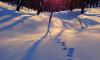 Главный синоптик Петербурга: сильные морозы будут лишь два дня