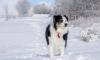 Петербуржец утопил оружие, спасая свою собаку