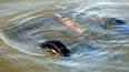 Трое подростков погибли под Тюменью, упав в реку в автом...