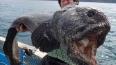 Японец выловил двухметровую рыбу-мутанта недалеко ...