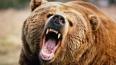 Медведица из карельского зоопарка напала на отца с ребен...