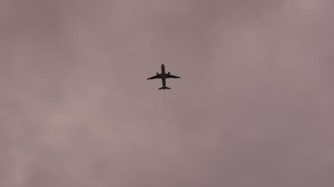 В Пулково самолет столкнулся в воздухе с птицей