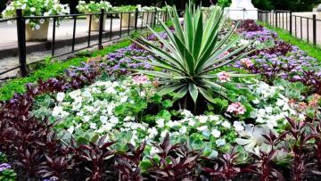 В Петербурге и Ленинградской области посадят 900 клумб с цветами