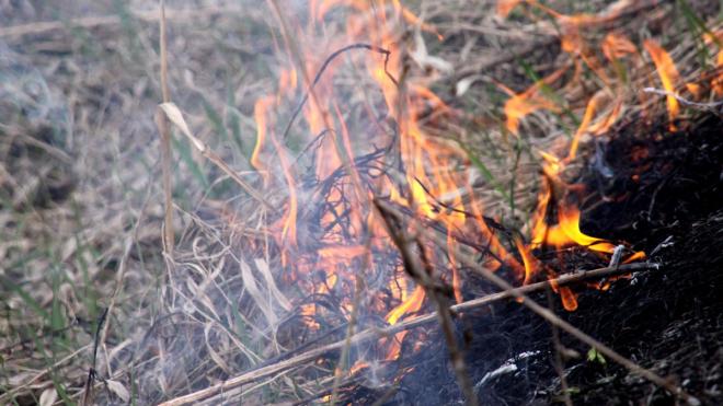 Сожженного в Волховском районе человека надеются идентифицировать