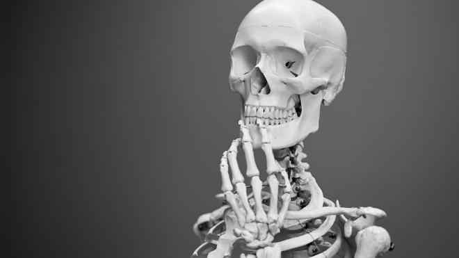 В канаве на Планерной нашли скелет