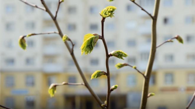 В Ленобласти 25 марта воздух прогреется до +9 градусов