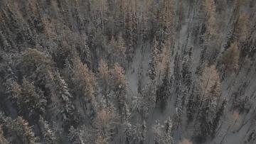 """Суд обязал ЗАО """"Фиро-О"""" очистить земли лесного фонда ..."""