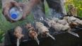 В парках Петербурга появятся общественные мангалы