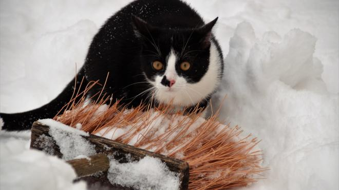 В преддверии 8 марта Ленобласть встречает зиму